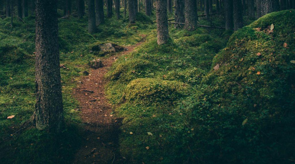 sti i skog